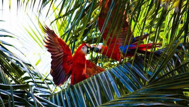 Costa Rican Rainforest Explorer