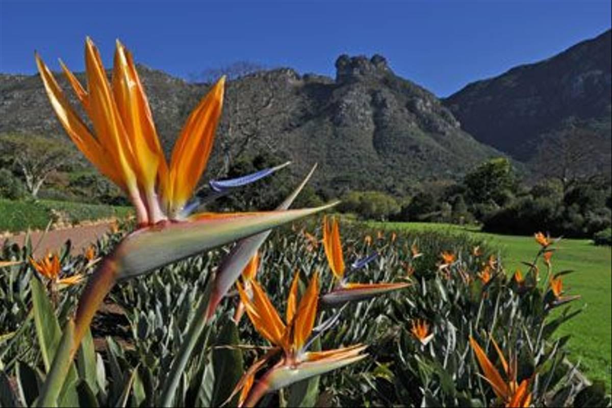 AF - Kirstenbosch Gardens.jpg