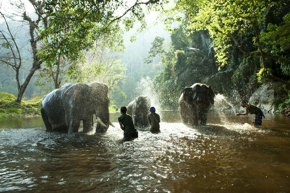 Thailand - Wildlife - Asian Elephants - AdobeStock_33336647.jpeg