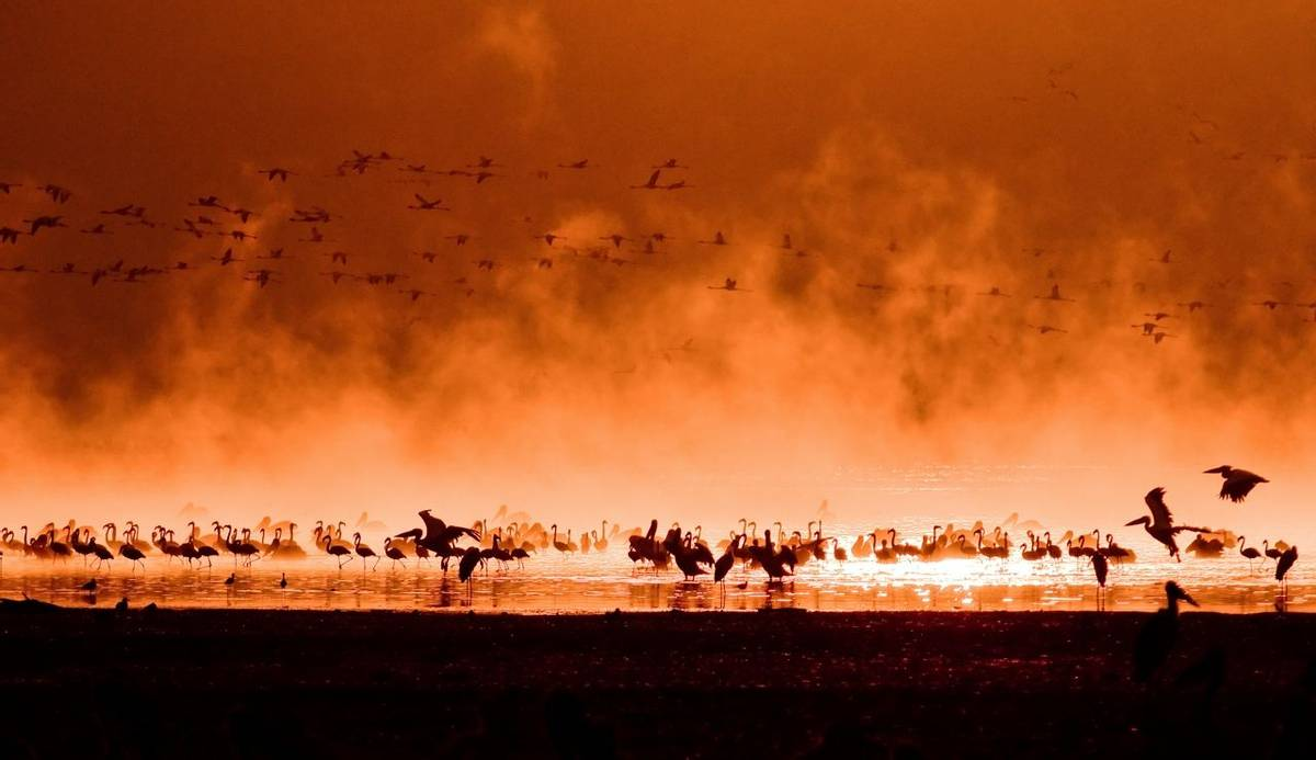 Flock Of Flamingos, Lake Nakuru, Kenya