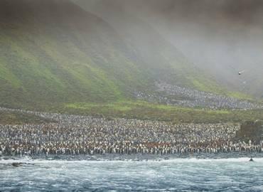 Sub-Antarctic Islands of New Zealand & Australia