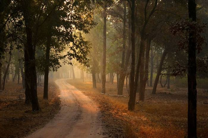 Pench-National-Park,-India-shutterstock_1083547478.jpg