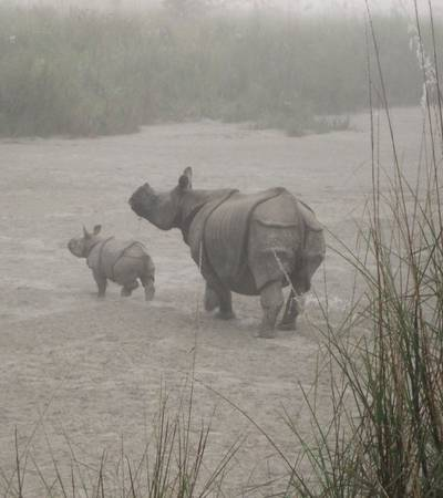 Rhinos in Chitwan National Park