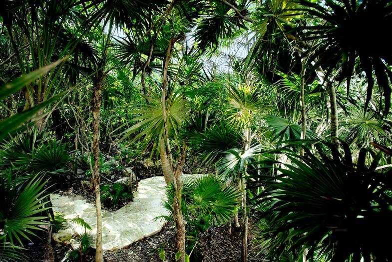 Palmaïa-House-of-AïA-JunglePath1A.jpg