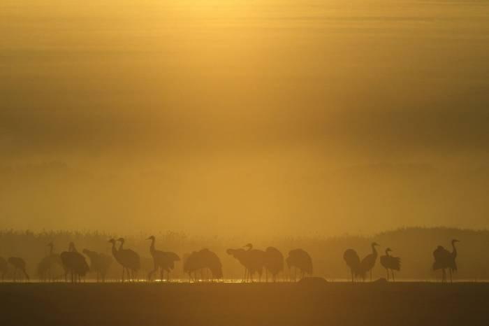 Cranes (Mati Kose)