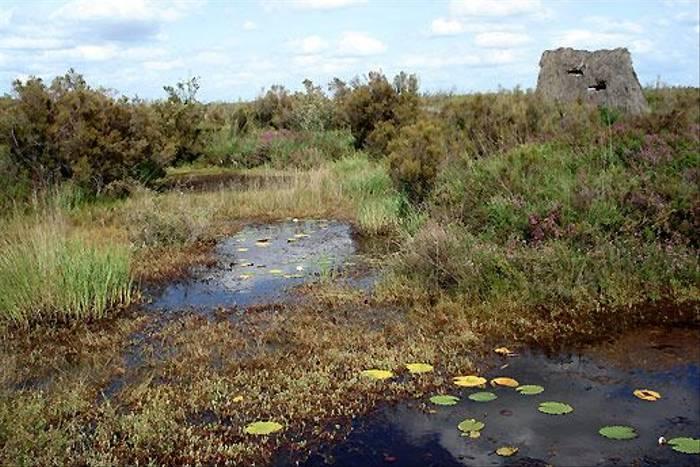 Pinail pond (Dave Smallshire)