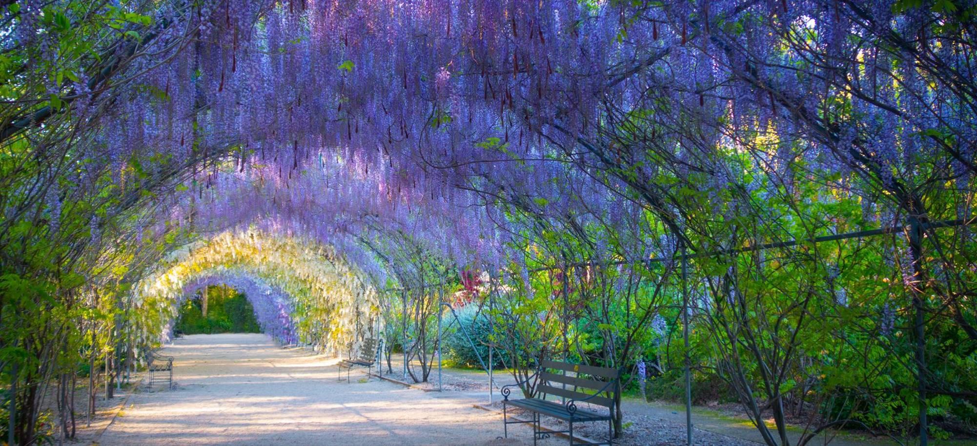 Adelaide   Botanic Garden   Itinerary Desktop