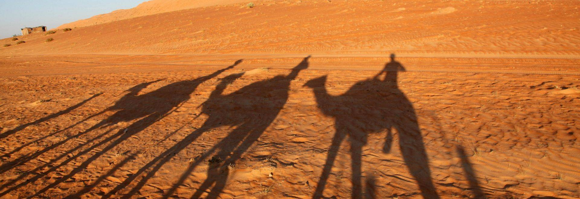 Silhouettes at sunset of camels against the red desert sands of Oman