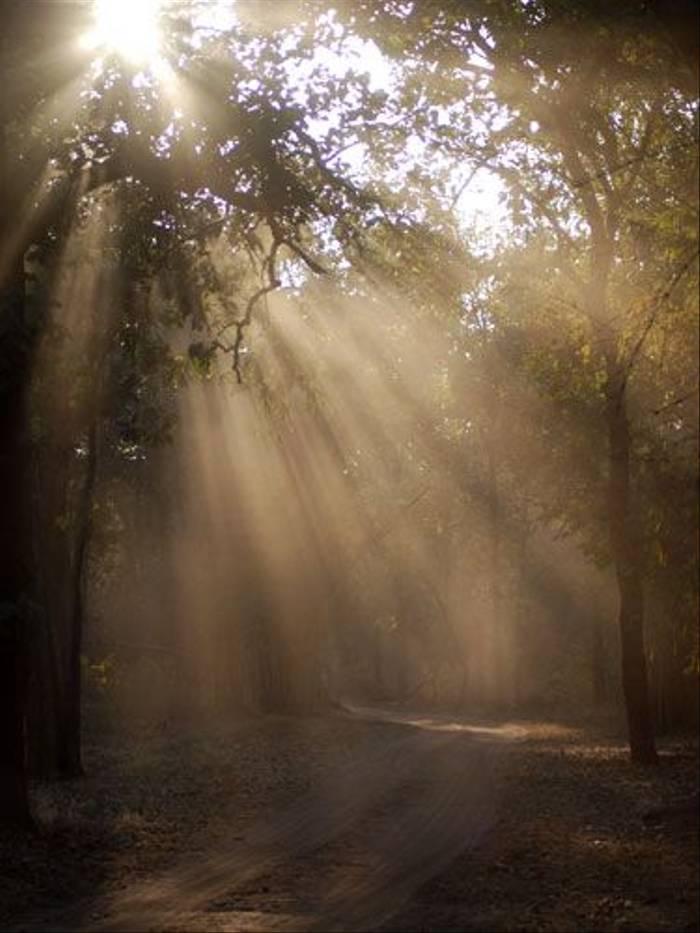 Bandhavgarh track (Thomas Mills)