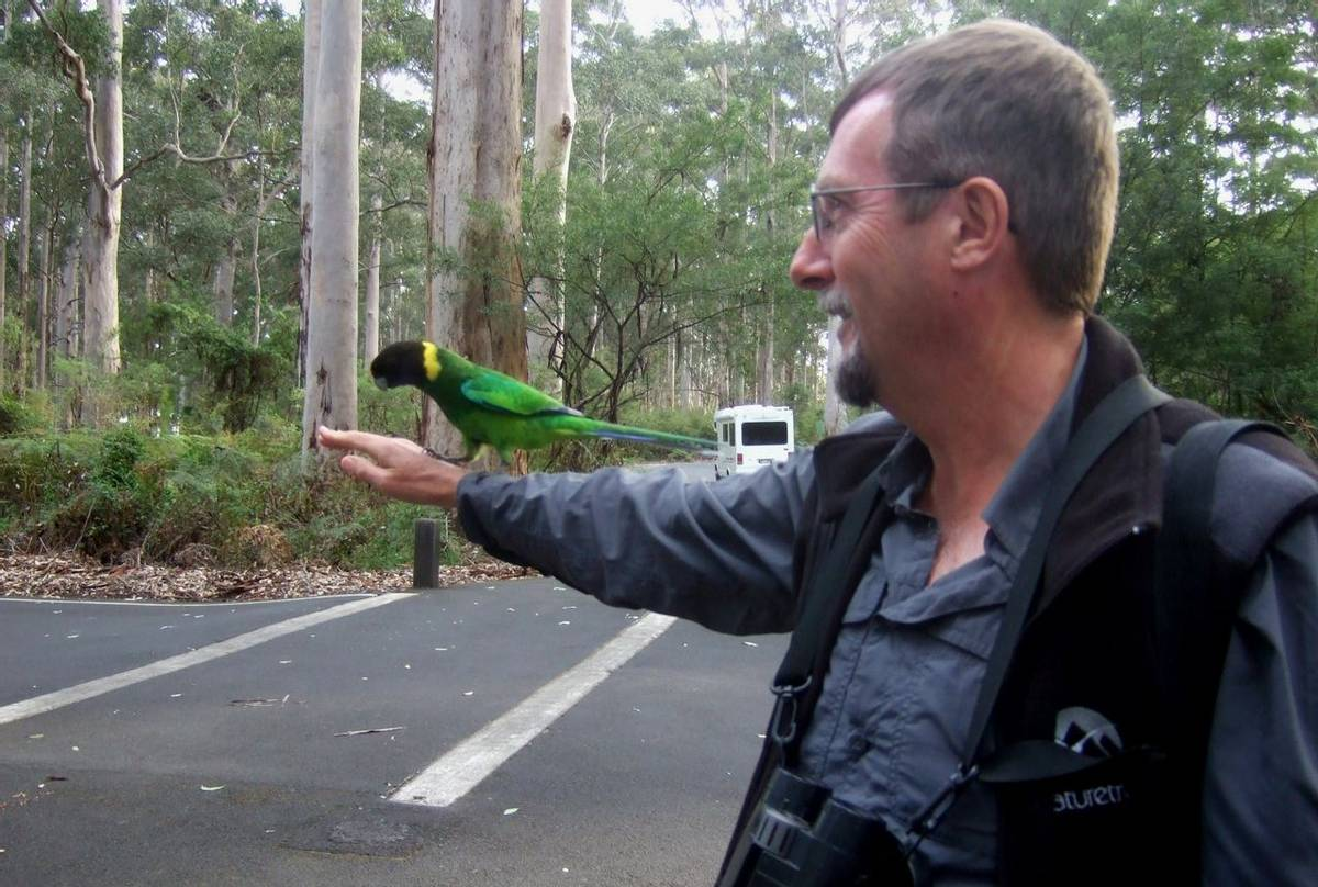 Peter the guide with Ringneck Parrots at The Gloucester Tree(Peter Taylor)