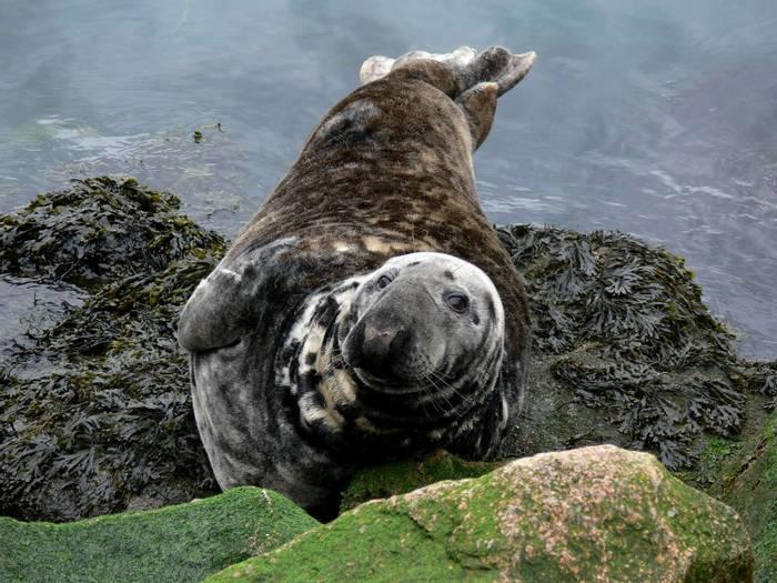 Grey Seal. Shutterstock 1202064