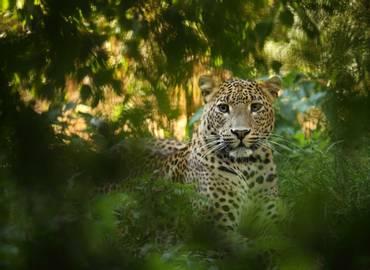 Wild Sri Lanka ... In Style!
