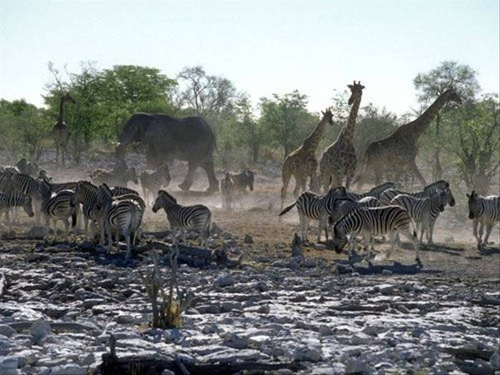 Animals around an Etosha waterhole (Paul Stanbury)