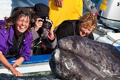 Clients With A Grey Whale Calf by Lee Morgan