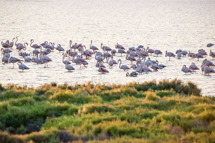Flamingos Ebro Delta, Spain Hutterstock 734435305