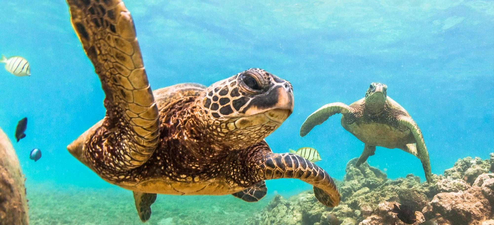 Itinerary Desktop Day 7 - Mauritius.jpg