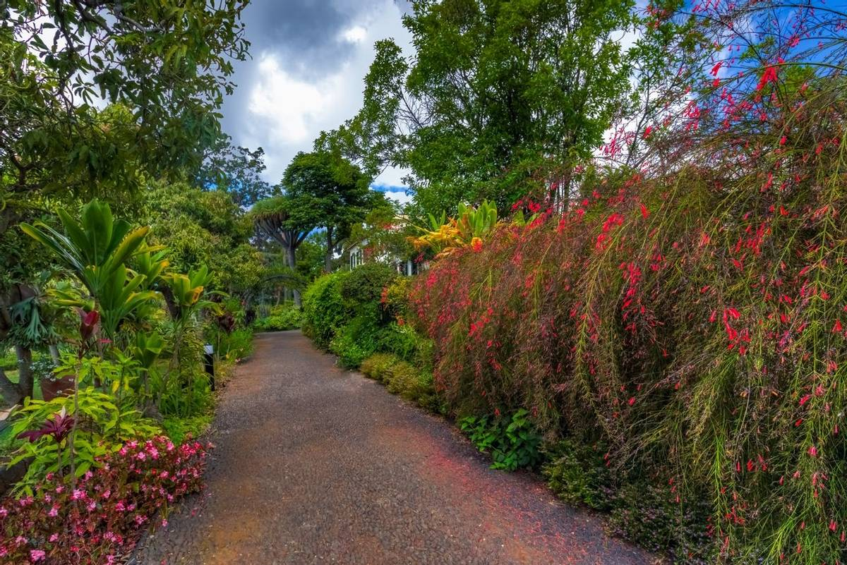 Portugal - Gardens of Madeira - Alberto Reynolds  - 30. QUINTA JARDINS DO LAGO GARDENS.tif