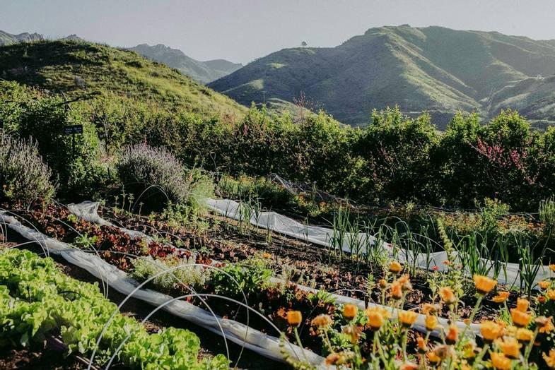 the-ranch-malibu-garden.jpg