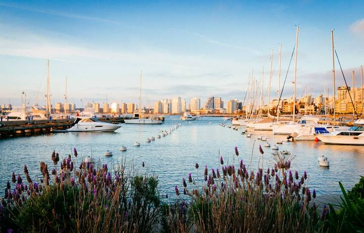 Punta del Este pier with lavender flowers in the foreground and boats and yachts in the background in the afternoon, with ci…
