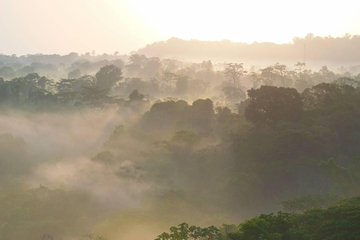 Rainforest, Costa Rica Shutterstock 1020688483