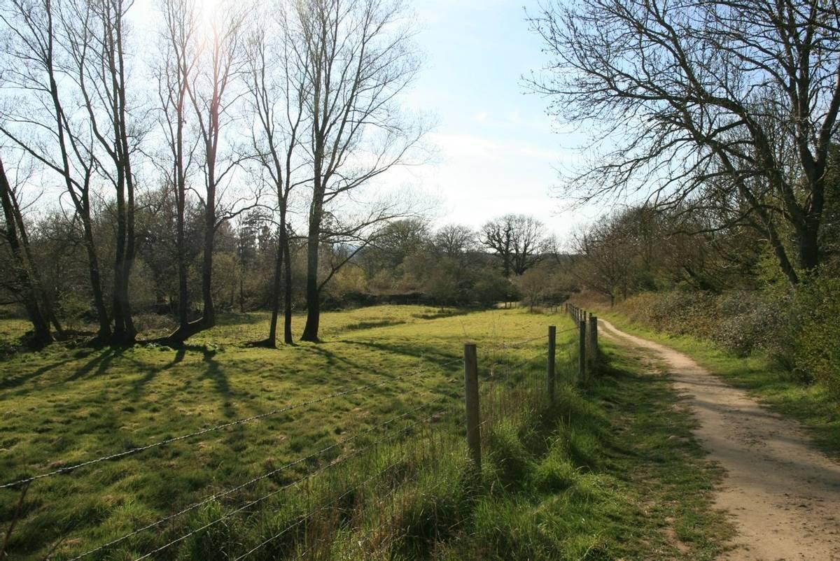Pulborough_Brooks_Nature_Reserve.JPG