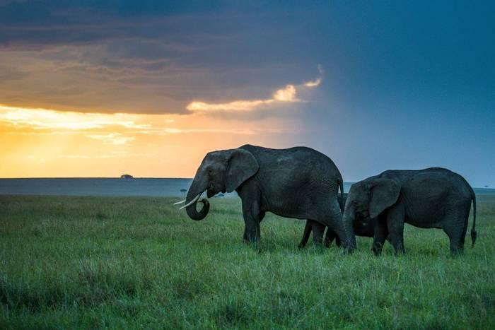 Elephants (John Haskew).jpg