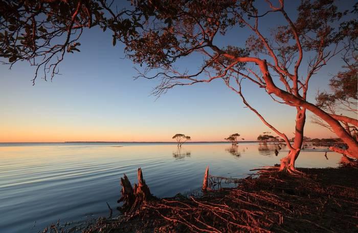 Mangroves at dawn