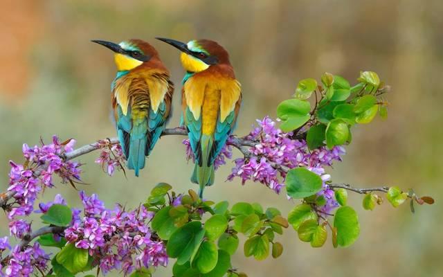 European Bee Eaters shutterstock_1704142348.jpg