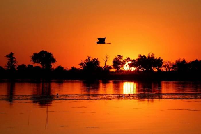 Okavango Delta shutterstock_1638555982.jpg