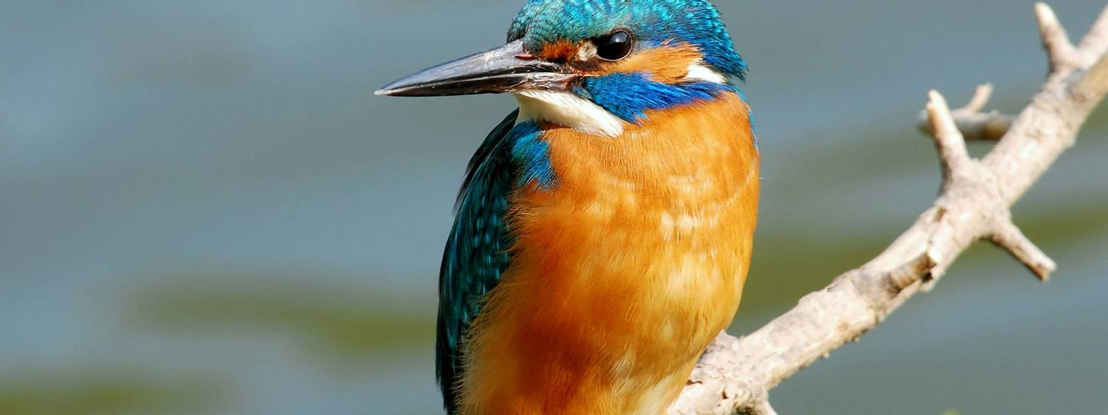 NaturalWorld-KingFisher-AdobeStock_17049571.jpeg