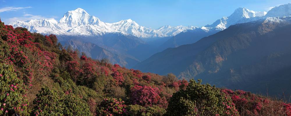 View-of-Dhaulagiri-(7th-highest-summit)-from-Poon-Hill,-Himalaya,-Nepal-shutterstock_132166100.jpg