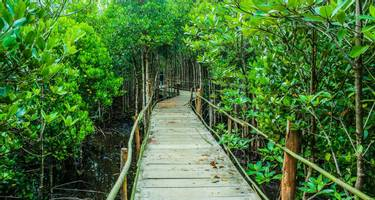 Wooden bridge surrounded by the jungle