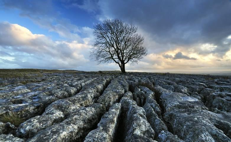 Malhamdale - Southern Yorkshire Dales - Tree on Limestone Paving - AdobeStock_21296238.jpeg