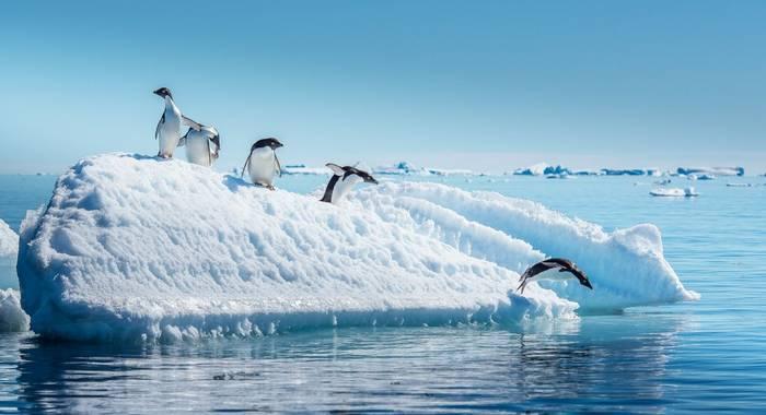Adelie Penguins, Antarctica Shutterstock 573319750
