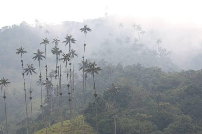 Valle De Cocora (3) (Robin Smith)