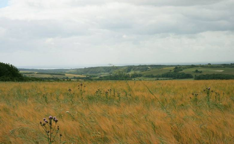 View_over_English_Channel_South_Downs.JPG