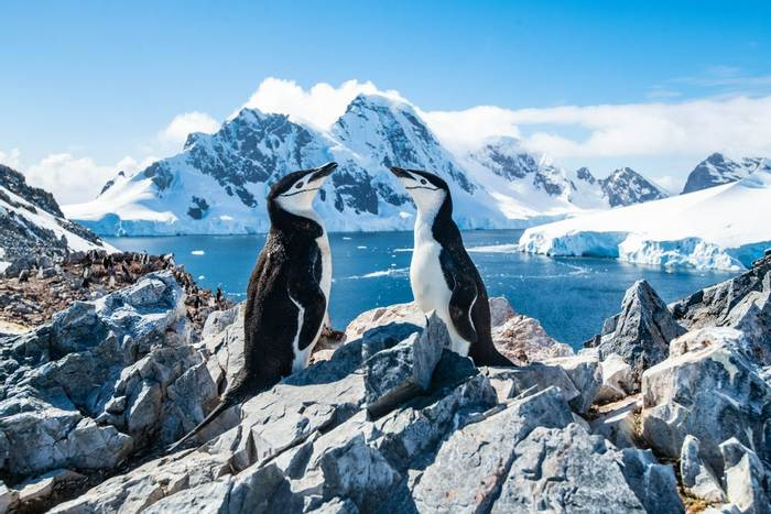 Chinstrap Penguins, Antarctica shutterstock_1342057160.jpg