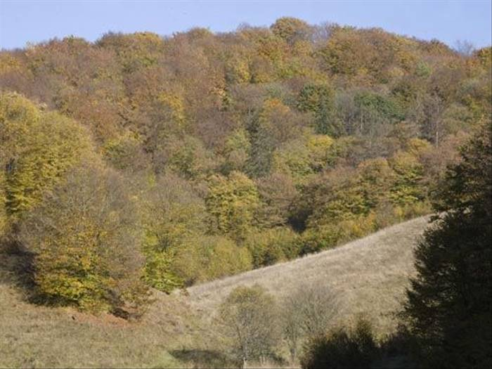 Bukk hills (Malcolm Stott)
