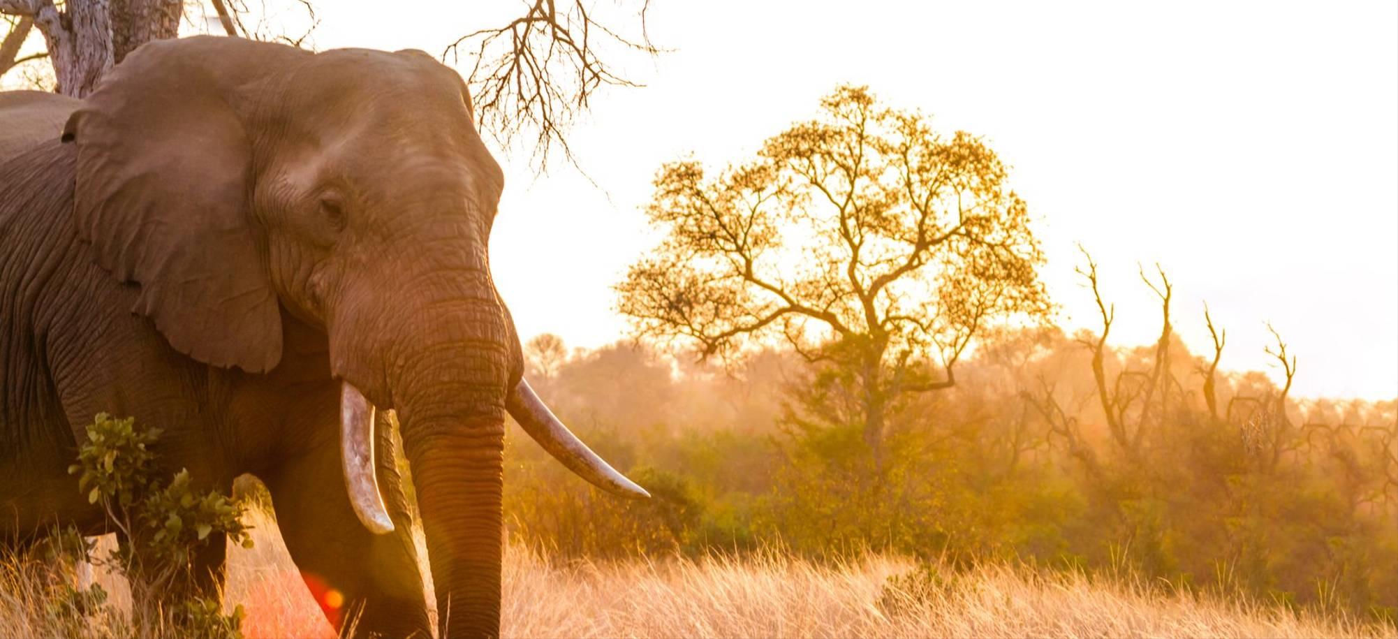 Kruger - Elephant - Itinerary Desktop .jpg