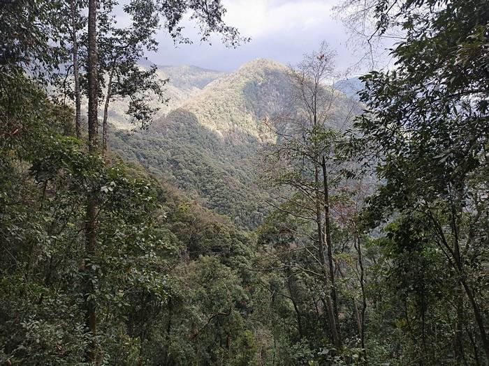 Habitat Gaoligong NNR (Sid Francis)