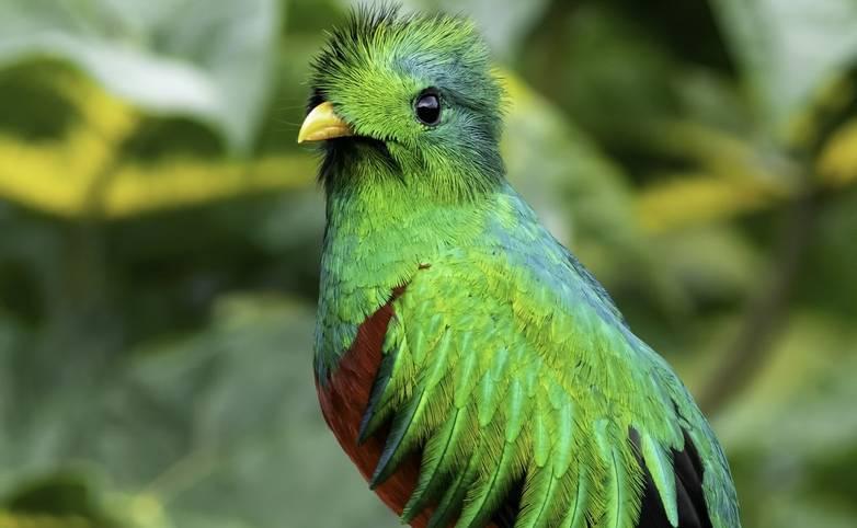 Costa_Rica_Resplendant_Quetzal_AdobeStock_303021684.jpeg