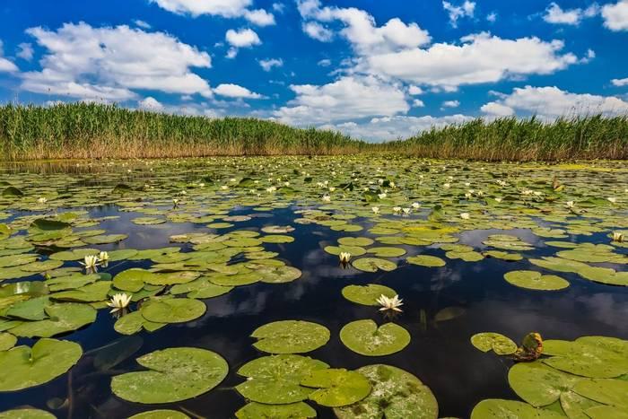 Danube Delta, Romania shutterstock_265448606.jpg