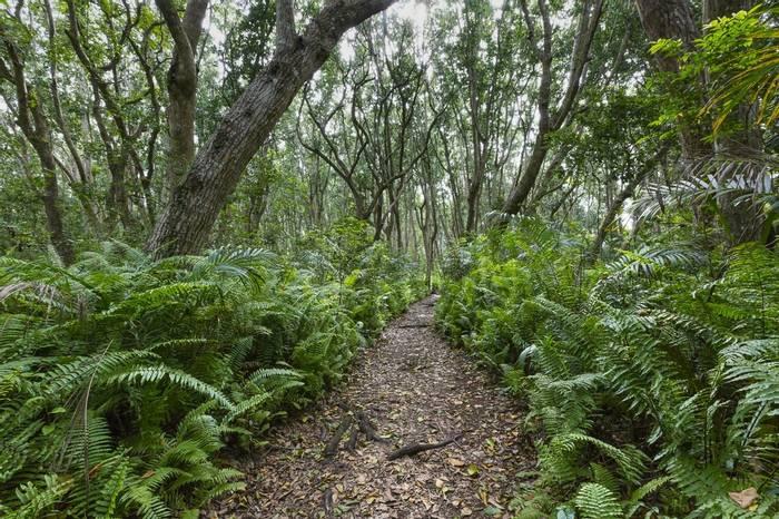 Jozani Forest, Zanzibar  Shutterstock 383721505 2