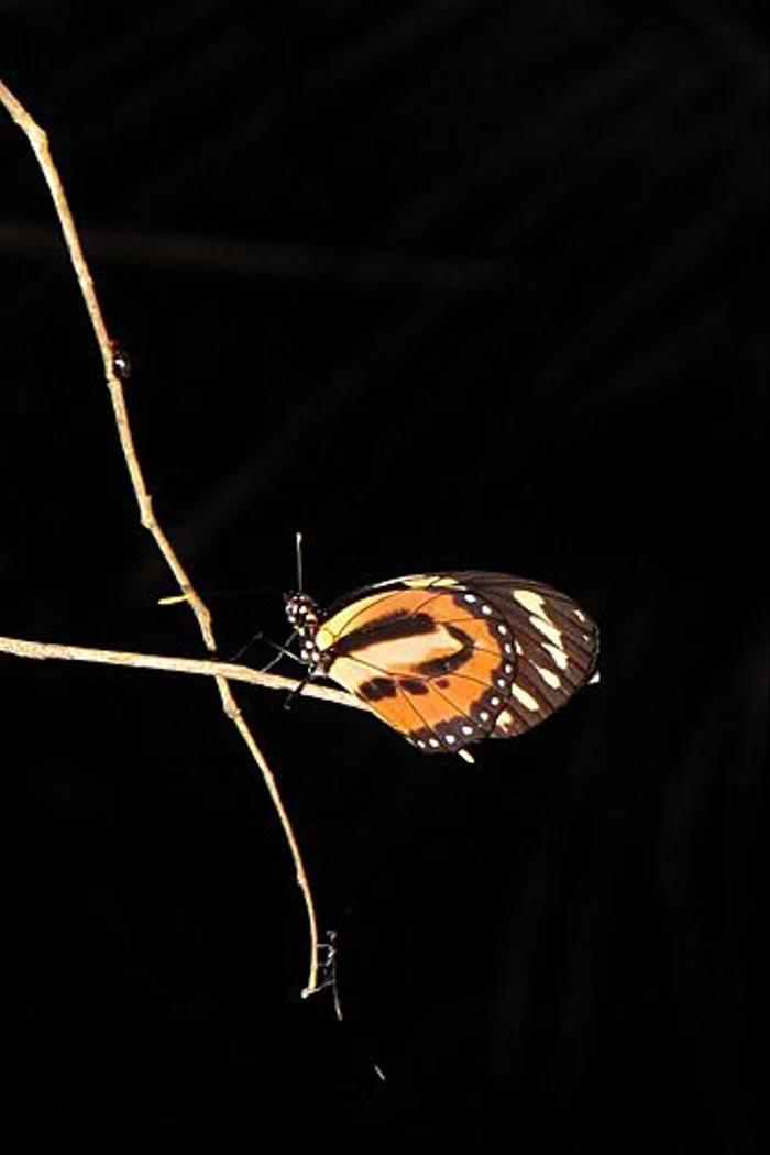Butterfly sp. (Kiera Griffin)