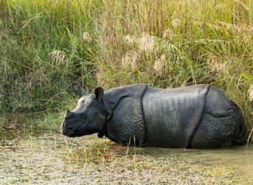 Nepal - A Mammal Tour