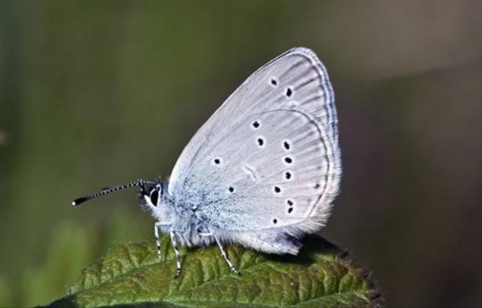 Small Blue (Lee Morgan)