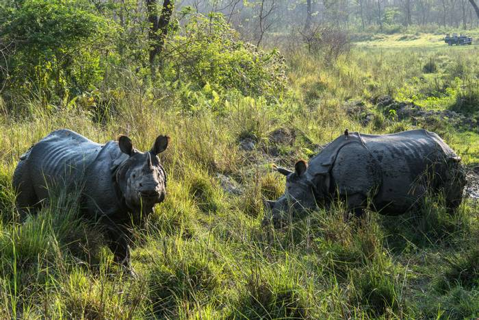 Indian Rhinoceroses, Chitwan National Park, Nepal shutterstock_686021875.jpg