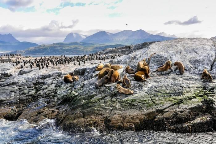 Sealions and Penguins, Beagle Channel, Tierra del Fuego shutterstock_312462830.jpg