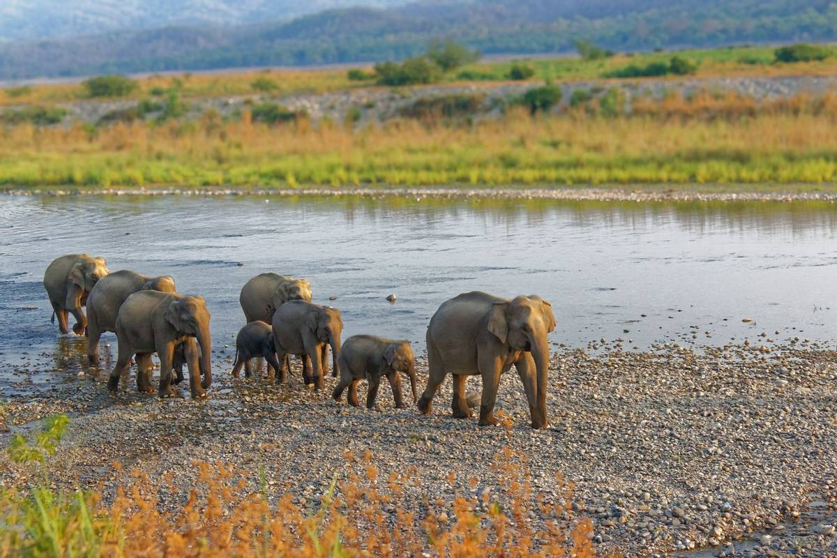 Indian Elephants, Corbett, India Shutterstock 765245173