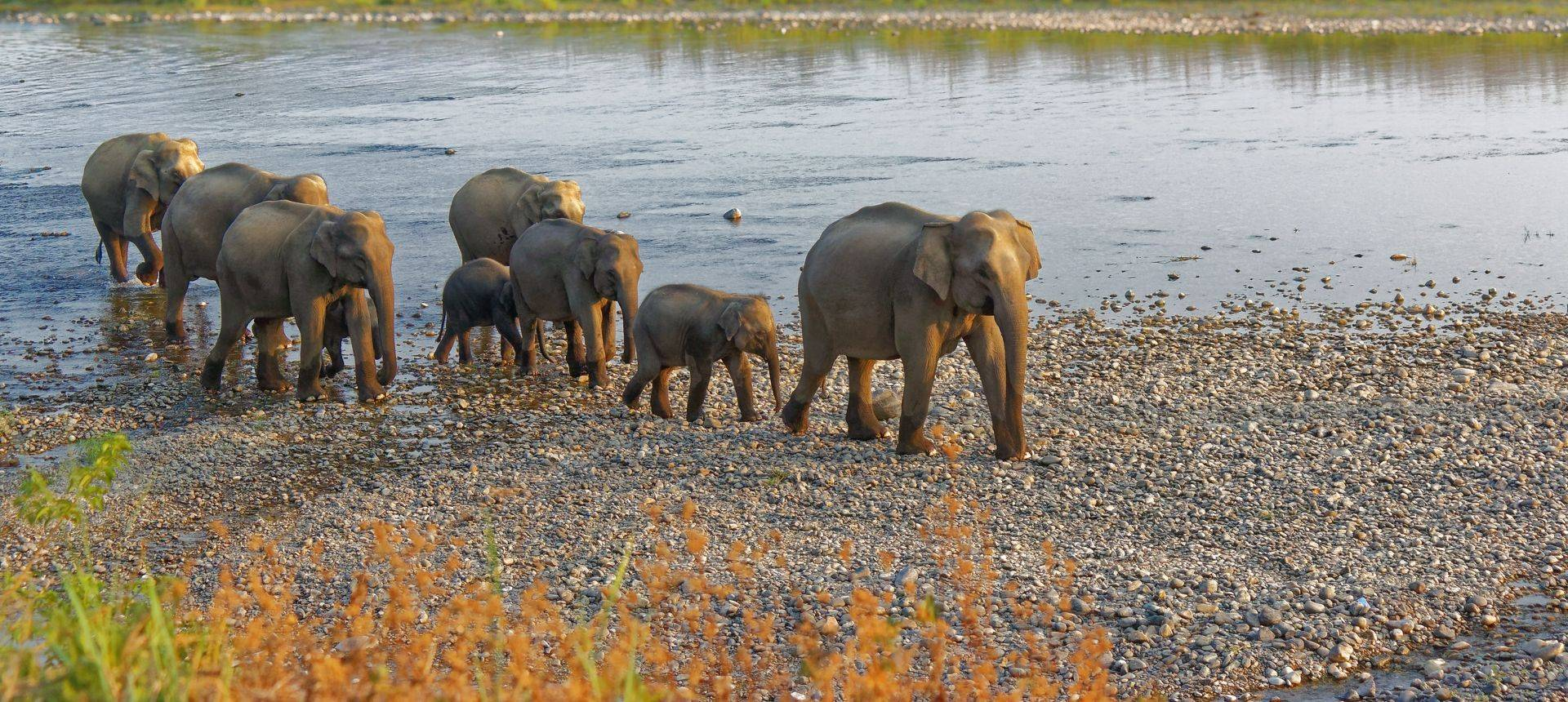 Indian Elephants, Corbett, India Shutterstock 765245173